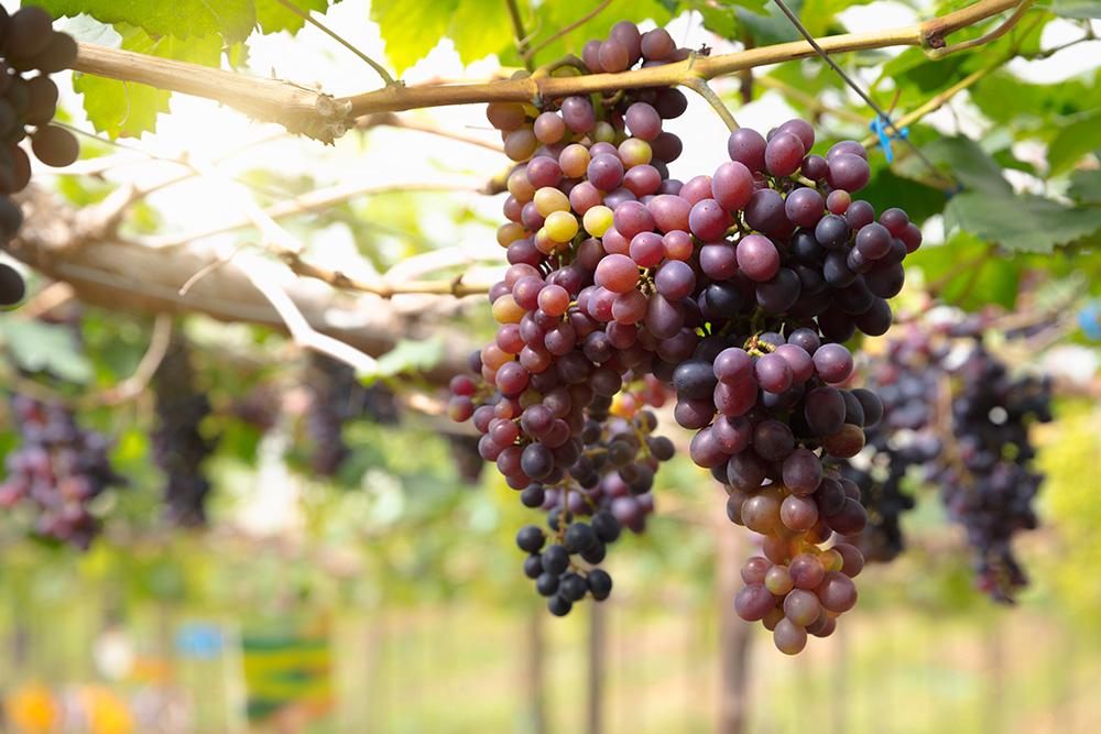 Органическое земледелие - выращивание ягод без химии