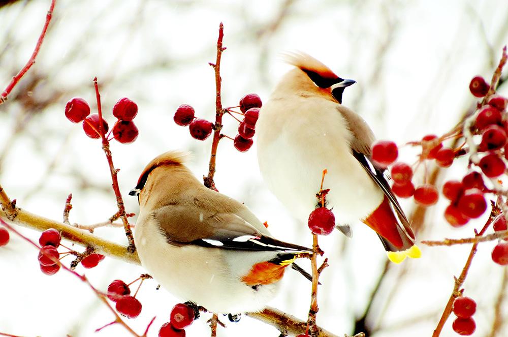 У листопаді зима з осінню бореться
