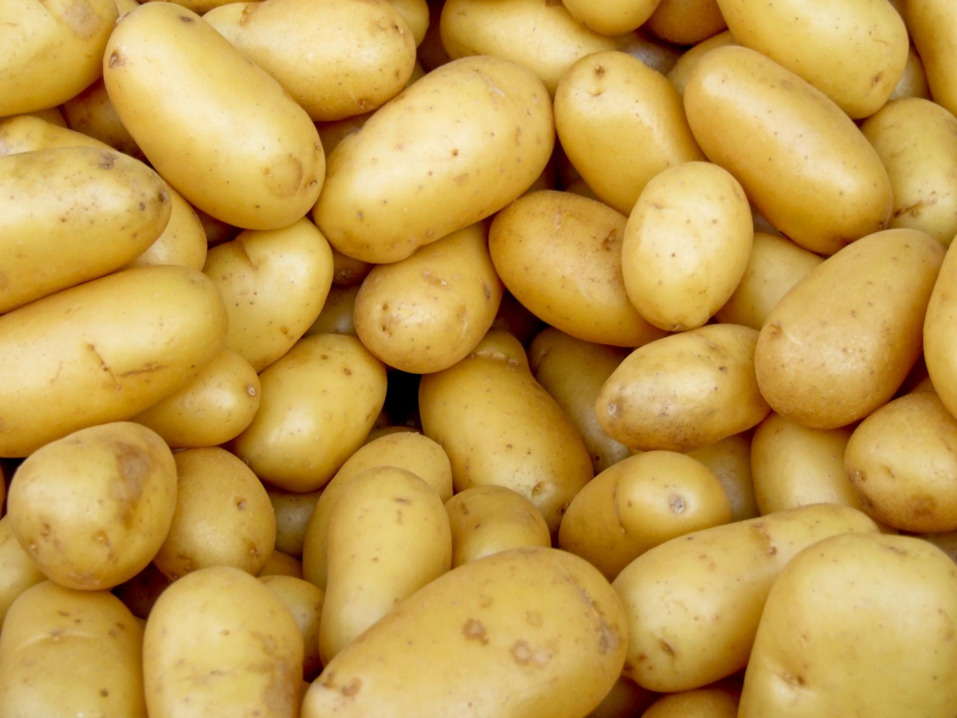 Эффективные средства защиты картофеля от парши