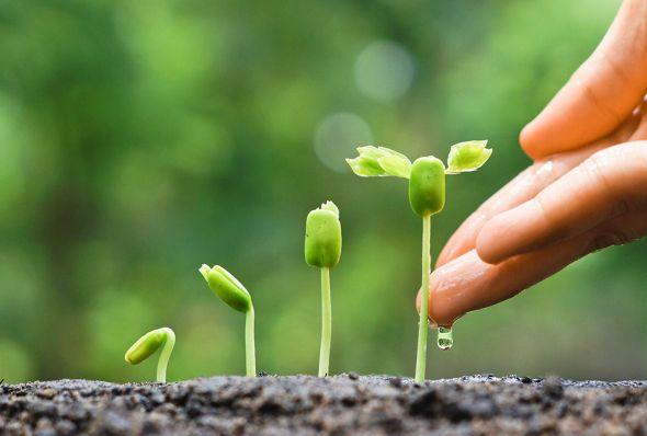 Что такое внекорневая подкормка растений