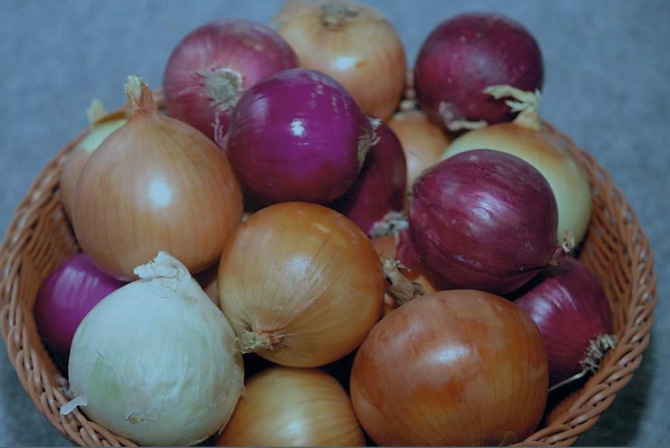 Красный лук севок: сладкие сорта, описание