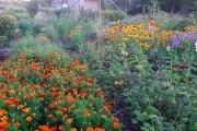 Який ґрунт, такий і врожай