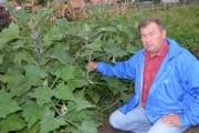 """Ростуть, квітнуть і плодоносять: """"нестандартні"""" рослини на городі"""