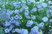 Нові фарби для садиби: малопоширені види літників