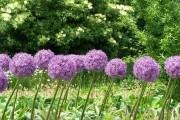 Семь луков для огородников: выбирай любой!