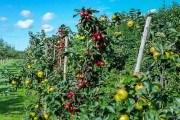 Дерева на фундаменті: насіннєві та клонові прищепи в садівництві