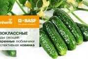 Время лучших: первоклассные гибриды овощей