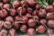 Дикун з блискучою кар'єрою: особливості вирощування столового буряка