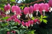 Дивовижні незнайомці: малопоширені декоративно-листяні та красивоквітучі рослини