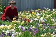 Все цвета радуги: карликовые ирисы украинской селекции