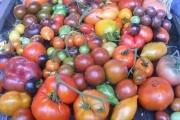 Крок за кроком: досвід вирощування помідорів-гігантів