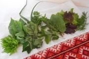 Трава біля хати: вирощуємо цілющі рослини на ділянці