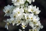 Сад у білих хмаринках: екзохорди у ландшафтному дизайні