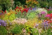 Казка одного літа: види квітників з однорічників