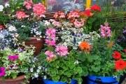 Найсприятливіші умови для краси: як утримувати кімнатні декоративні рослини