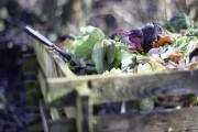 Корисні органічні відходи: як відновити родючість ґрунту на городі