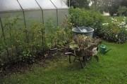 Задача содним невідомим: як визначати та коригувати кислотність ґрунту на ділянці