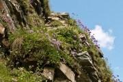 Гори в мініатюрі: принципи побудови альпійської гірки у садибі