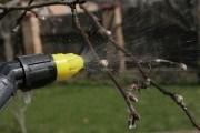 Особливості ранньовесняного захисту плодових дерев