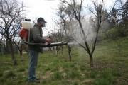 Поки сади не розквітуть: весняні обприскування Ранньовесняне обприскування саду