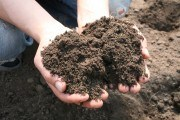 """Коли земля """"втомилася"""": відновлюємо продуктивність ґрунту на ділянці і в теплиці"""