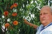 Насолода смаком: вирощуємо продуктивні сорти персика та нектарина Інжирний персик сорту Бельмондо