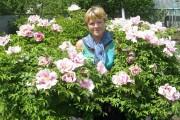 Квітка імператора: вирощуємо деревоподібну півонію