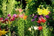 Цветок эльфов