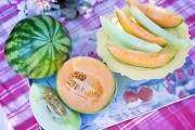 """Смачний шлейф літа: досвід вирощування """"солодких"""" сортів дині та кавуна"""