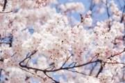 Поради садоводам-початківцям: як вирощувати власний посадковий матеріал плодових культур