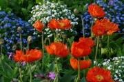 Квітники у серпні: час підживлювати, пересаджувати та розмножувати
