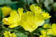 """Приборкання """"дикунів"""": лісові рослини у дизайні саду"""