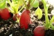 Червень кличе на город : розпочинаємо повторні посіви