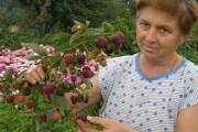 Чому ягідники хворіють? Причини низького врожаю та засоби його підвищення