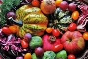 Капуста, тыква и компания: сохраним урожай на зиму