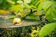 По закону жизни: обновляем плодовый сад