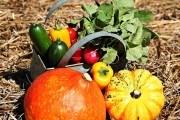 В обіймах осені: вирощування врожайних сортів огірка, кавуна та гарбуза