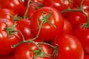 Томатне свято: як домогтися рясного плодоношення на грядках