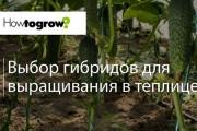 Урок 1: вирощування огірка у професійних теплицях, які обігріваються