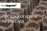 Урок 2: посів насіння огірків на розсаду