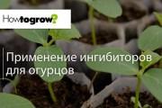 Урок 4: застосування інгібіторів росту для огірків