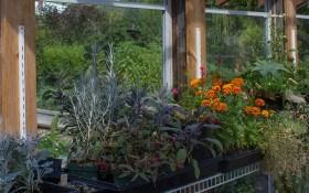 Квітник за склом: встановлюємо міні-теплиці та міні-парники для рослин