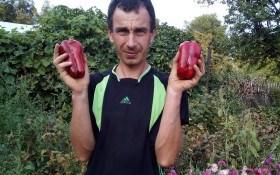 Норовливий овоч: як отримати високий врожай солодкого перцю
