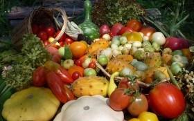 Гармония пользы и красоты: посадка лиан, тыквенных и бобовых культур