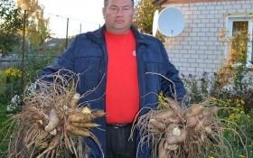 Тричі перевірені! Корисні та цілющі рослини на городі