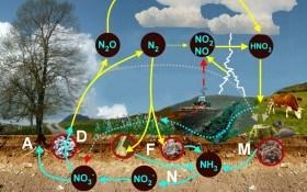 Как пополнить содержание почвенного азота естественным путем
