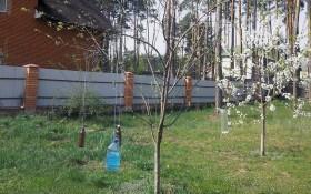 Прищіпка на яблуньці, або що потрібно весняному саду
