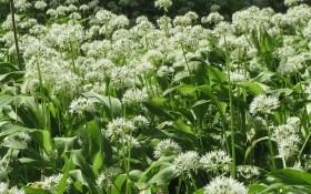Снадобья уже набрались сил: витаминные травы для здоровья и энергии