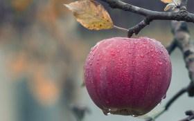 Осінь закликає в сад: посадка дерев та кущів