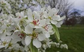 Сучасний захист яблуневого саду в ранньовесняній період